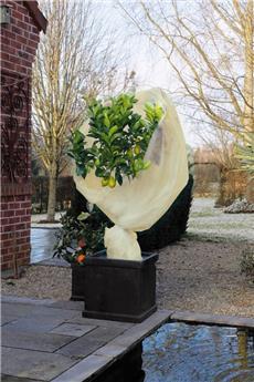 Voile housse hivernage beige l 2 * L 10 m 60 gr/m²