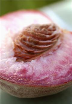Pêcher Sanguine Vineuse Buisson C7.5L ** Très rustique et  autofertile **