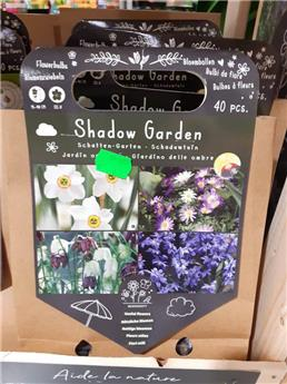 Bulbes utiles ombre  (VT) ** A planter en automne **