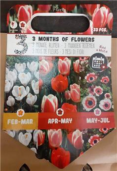 Bulbes mix 3 mois floraison Rouge et Blanche  (VT) ** A planter en automne **