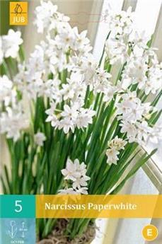 Narcisse Paperwhite * 5 pc cal.15/16 ** Très parfumé: pour l´intérieur  **