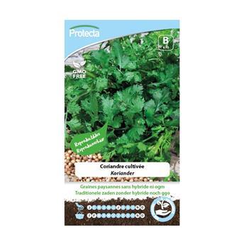 Coriandre cultivée (Protecta)