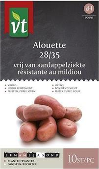 Plants De Pommes De Terre Alouette 28/35 10 Pc (VT)