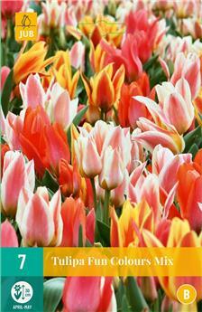 Tulipe Fun Colours * 7 pc cal.11/12