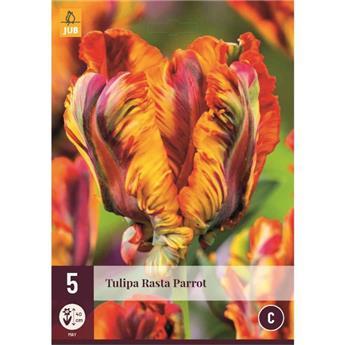 Tulipe Rasta Parrot * 7 pc cal.11/12