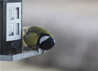 Nourrissez les oiseaux: vos meilleurs alliés contre les insectes.