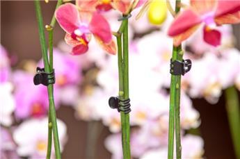 Pinces tuteurage orchidees noire