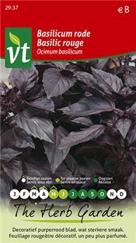 VT basilic rouge