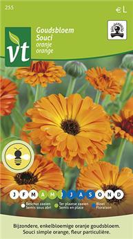 VT souci orange Bio