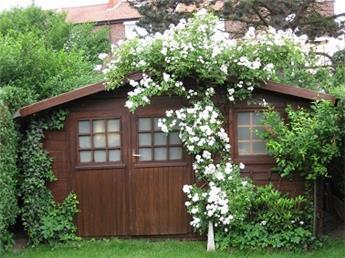 Rosier Guirlande d´Amour® (Blanc) Grimpant Pot C4