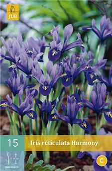 Iris reticulata Harmony 5 PC / POT
