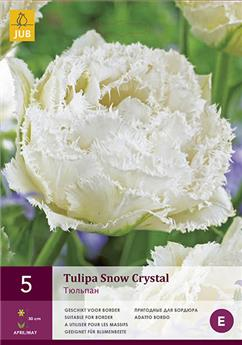 Tulipe crystal star new * 7 pc cal.11/12