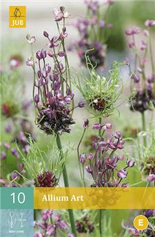 Allium Art 5/+ X 10 pc