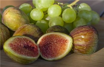 Ficus carica Goutte d´Or Pot c15 DT 10-12