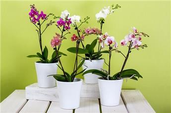 Sani Terreau spécial Orchidee 10 L