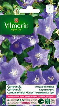 Campanule des Carpathes Bleue - S1 (Vilm)