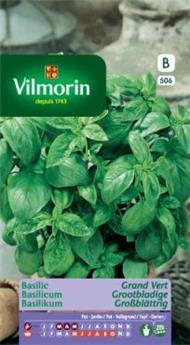 Basilic Grand Vert - SB (Vilm)