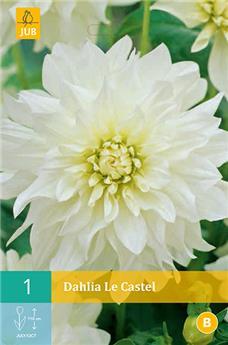 Dahlia Le Castel * 1 Pc