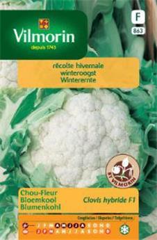 Chou fleur Clovis - SF (Vilm)