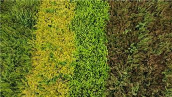 Erica carnea variées P11 ** Bruyère d´hiver **