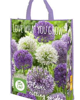Allium pourpre-blanc * sac de 20  pc cal.12/14